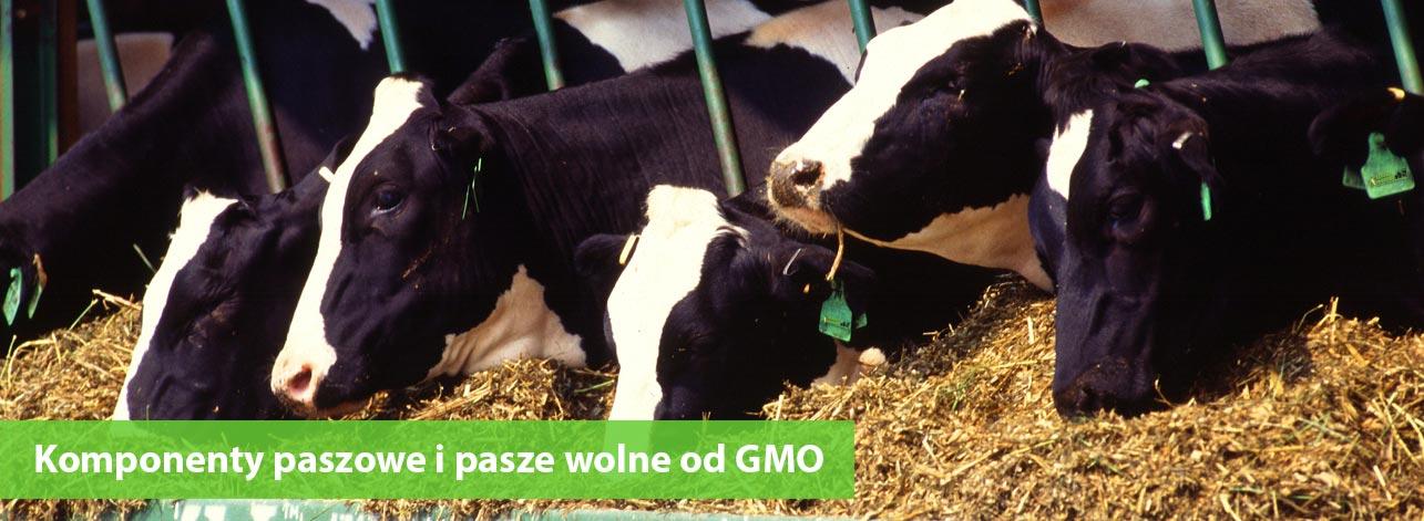 Pasze i komponenty paszowe bez GMO