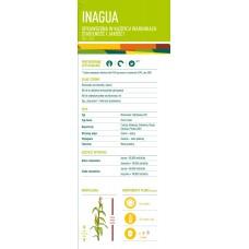 Nasiona kukurydzy EURALIS INAGUA (FAO 240-250)