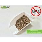 Młóto browarniane. Produkt wolny od GMO.