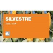 Nasiona kukurydzy KWS SILVESTRE (FAO 220-230)