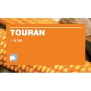 Nasiona kukurydzy KWS TOURAN (FAO 230)