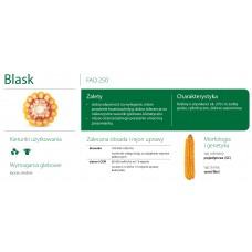 Nasiona kukurydzy SMOLICE BLASK (FAO 250)