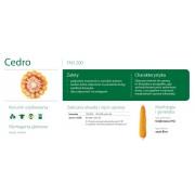 Nasiona kukurydzy SMOLICE CEDRO (FAO 200)