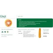 Nasiona kukurydzy SMOLICE GLEJT (FAO 230)