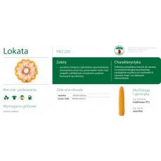 Nasiona kukurydzy SMOLICE LOKATA (FAO 220)
