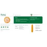 Nasiona kukurydzy SMOLICE RATAJ (FAO 220-230)