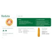 Nasiona kukurydzy SMOLICE REDUTA (FAO 230)