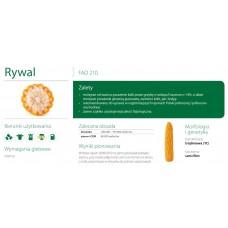 Nasiona kukurydzy SMOLICE RYWAL (FAO 210)