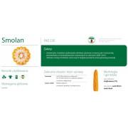 Nasiona kukurydzy SMOLICE SMOLAN (FAO 230)