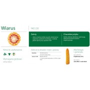 Nasiona kukurydzy SMOLICE WIARUS (FAO 220)