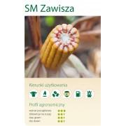 Nasiona kukurydzy SMOLICE ZAWISZA (FAO 240-250)